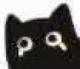 :blackcat_11124: